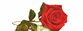 Осми март- Меѓународниот ден на жената