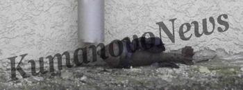 Во градот подметнати две гранати