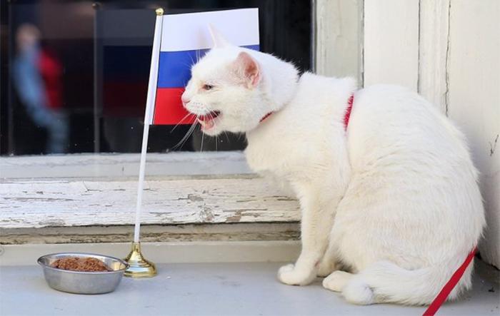 Мачорот Ахил ќе ги претскажува резултатите на Светското првенство во Русија