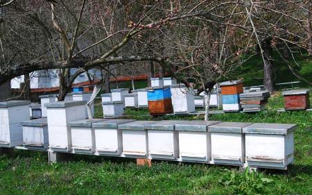 """""""Пчела"""" организира едукативни предавања за пчелатите од регионот"""