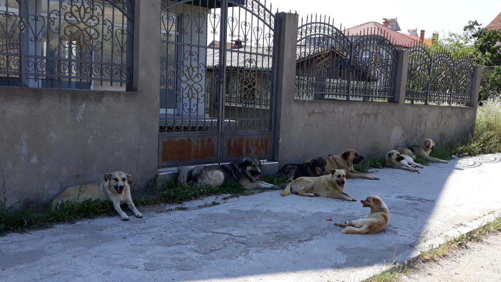 16 напади од кучиња скитници за шест месеци- граѓаните и здруженијата бараат решавање на проблемот