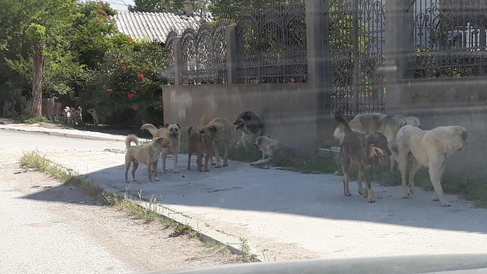 Задолжителна кастрација на домашните миленичиња или глоба од 100 до 700 евра, предвидуваат законските имени