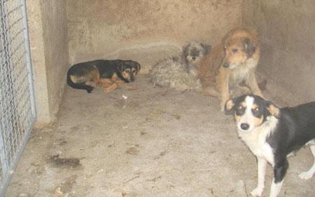 """Започна проектот """"Куманово град пријател на животните"""""""