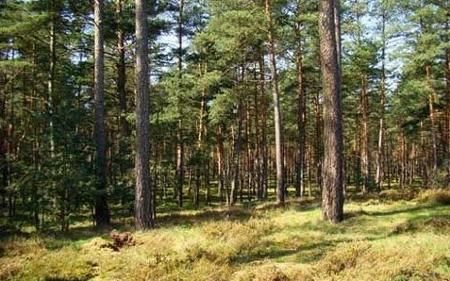 МЗШВ: Се укинува забраната за движење во шуми и шумски подрачја