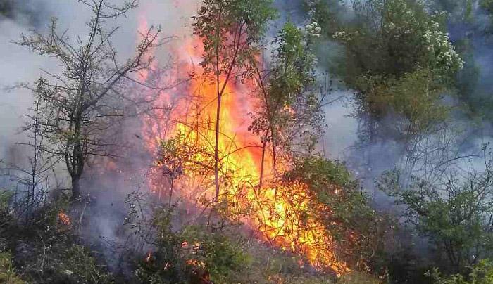 Пет пожари во изминатото деноноќие, горела сува трева и контејнер