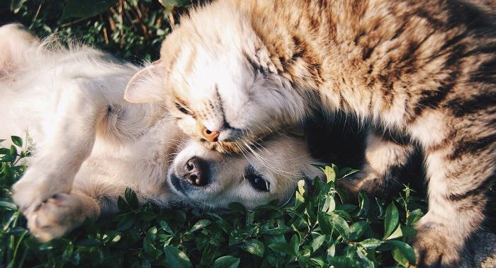 Уште еден месец бесплатно микрочипирање на домашните миленици